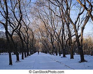 Winter cityscape. Avenue in the park. Yekaterinburg. December