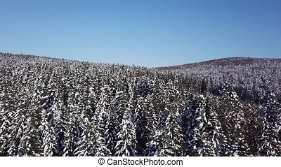 Winter coniferous forest. Aerial view - Coniferous forest a...