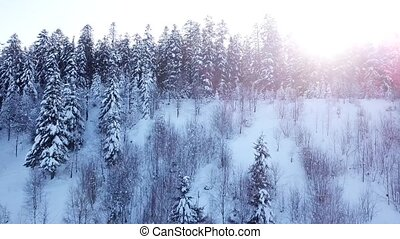 Winter coniferous forest. Aerial view - Winter coniferous...