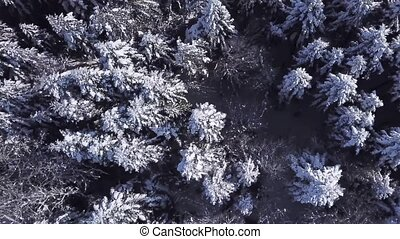 Winter coniferous forest . View from above . Aerial view -...