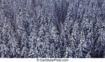 Winter coniferous forest with a copter. View from above....