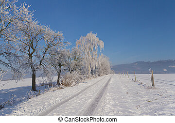 Dirt road lined with snowy trees on the left side.