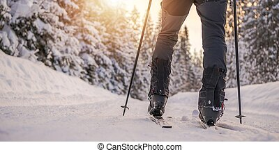 Winter Cross Country Skier