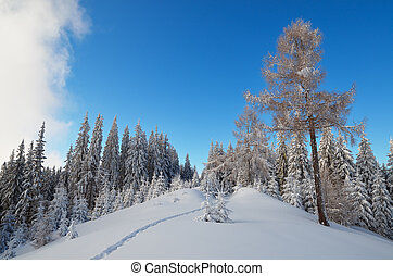 Winter day in forest