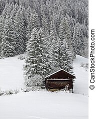 Winter day in the Bernese Oberland. - Forest and timber hut.
