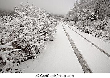 Winter day in the Cypress Hills of Saskatchewan