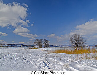 Winter day in the field of