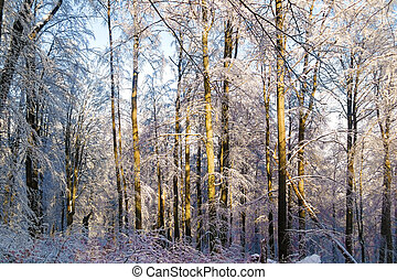 Winter deep forest