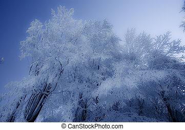 winter details 2