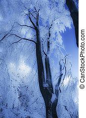 winter details 3