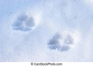 Winter Dog Tracks