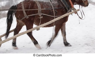 Winter driving on horses at farm