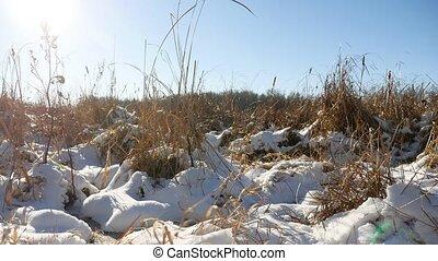 winter, droog, gras, in, de, sneeuwlandschap, akker, sneeuw, natuur