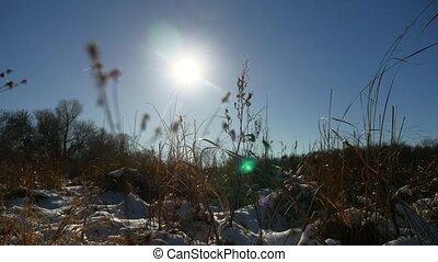 winter, droog, gras, in, de, t?µ?a? ???????, landscape, natuur, sneeuw