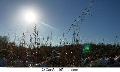 winter, droog, silhouette, gras, in, de, t?µ?a? ???????, landscape, sneeuw, natuur