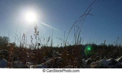 Winter dry silhouette grass in the snow field landscape snow...