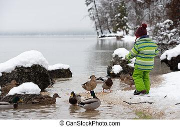 winter, enten, see, kind, grüne klage, fütterung, kleinkind