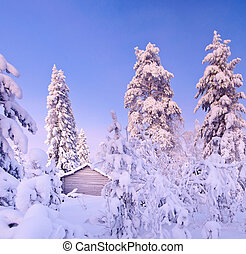 Winter fairy snow forest with pine trees