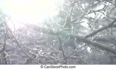 Winter Fairy Tale Forest - Snow falls slowly among the trees...