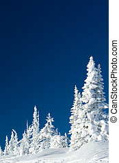 Image of great winter day with white fir trees in snowdrifts