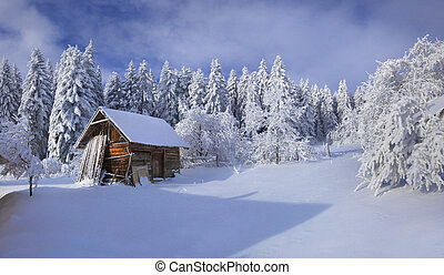 Winter fairytale, heavy snowfall covered the trees and ...