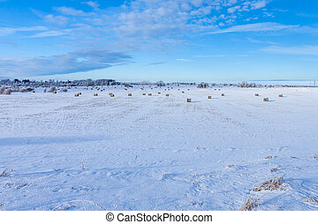 Winter farmland scenery