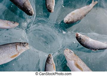 Winter fishing on the lake. - Winter fishing on Lake Baikal...