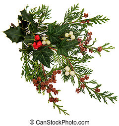 Winter and christmas flora and fauna with holly, ivy, mistletoe with berry clusters and cedar leaf sprigs with pine cones over white background.