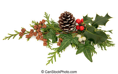 Winter and christmas flora and fauna of holly, ivy, mistletoe and cedar leaf sprigs with pine cones over white background.