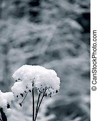 Winter flower. Snow.