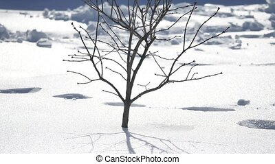 winter footprints in the snow sunlight young dry tree...
