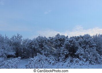Winter forest after a snowfall on Christmas in the dead of winter in January.