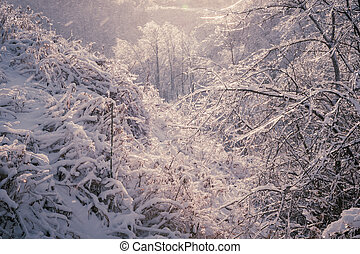 Winter forest after ice storm - Ice covered trees in scenic...