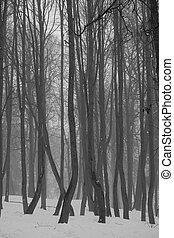 Winter forest and fog