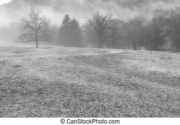 winter forest and mountain landscape in bad weather with fog and rime on the ground in black and white