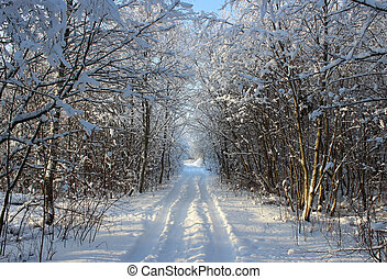 Winter forest and road after a snowfall on Christmas in the dead of winter.