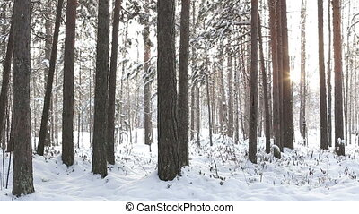 Winter forest and sun.