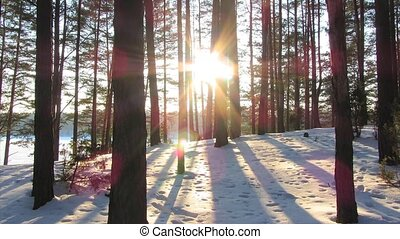 Winter Forest and the sun, timelaps