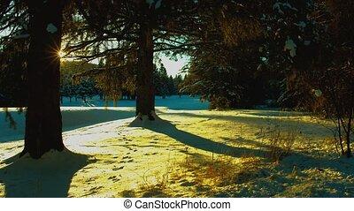 winter forest at sundown