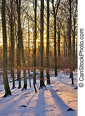 Winter forest at sunset - View of a forest in winter during...