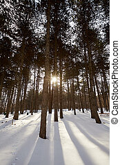 Winter forest at sunset with sun rays