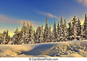 Winter forest at the gentle colors of setting sun