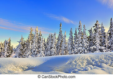 Winter forest at the gentle colors of the setting sun