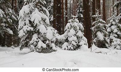 winter forest, crane