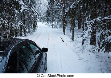 Winter forest driving