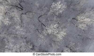 Winter forest, flying over the trees studded with frost