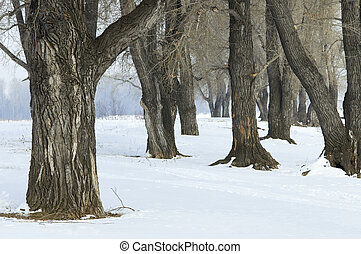 winter forest - forest