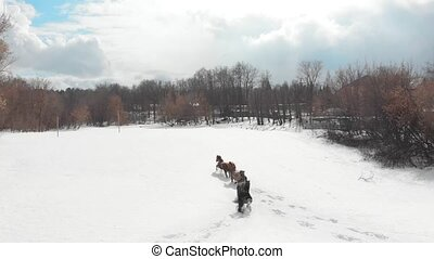 Winter forest. Four horses running on a snowy ground. Aerial...