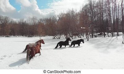 Winter forest. Four young horses walking on a snowy ground....