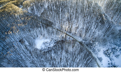 Winter Forest From The Air